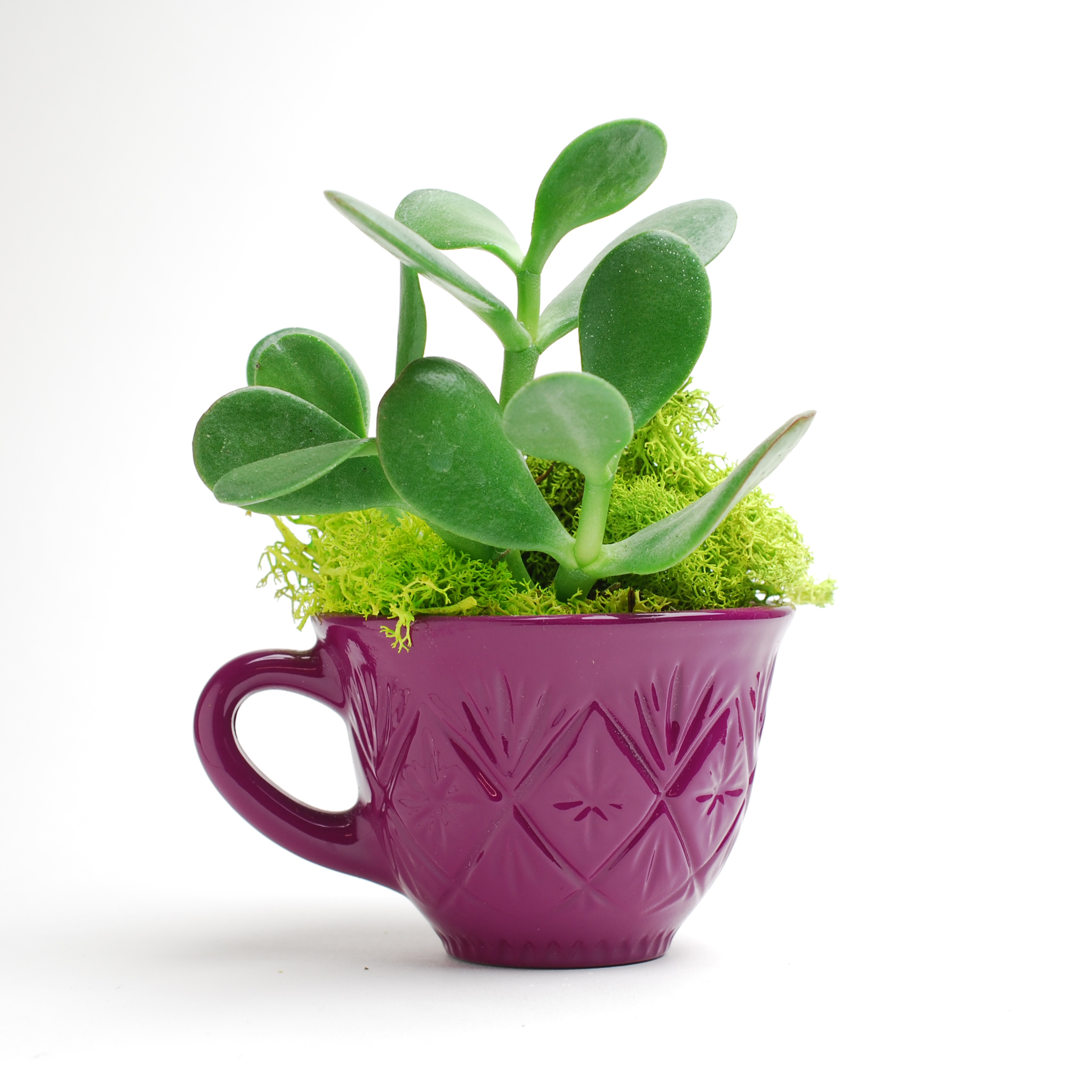 Singleton Crystal Punch Cup Planter