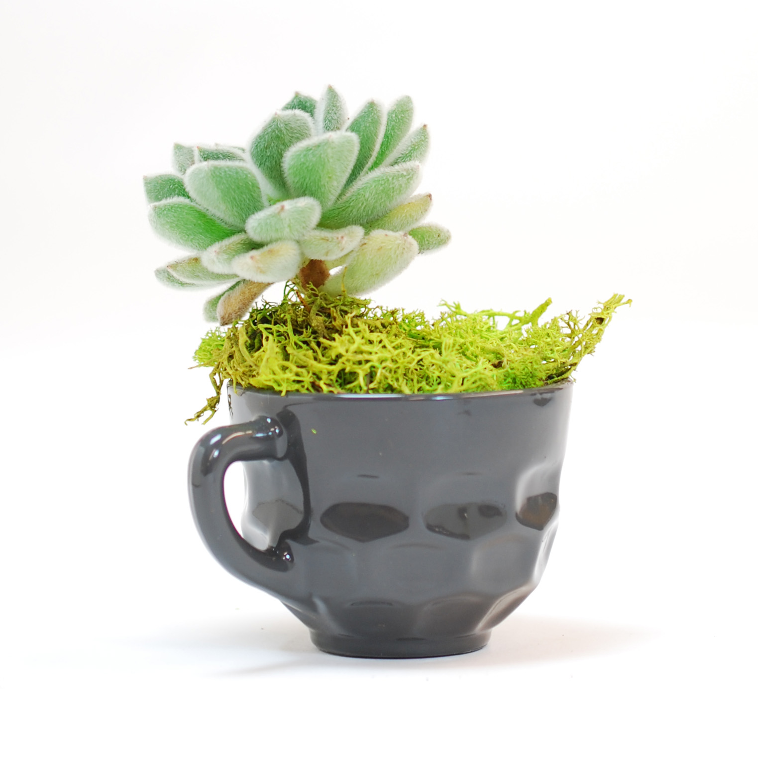 Grey Punch Cup Planter
