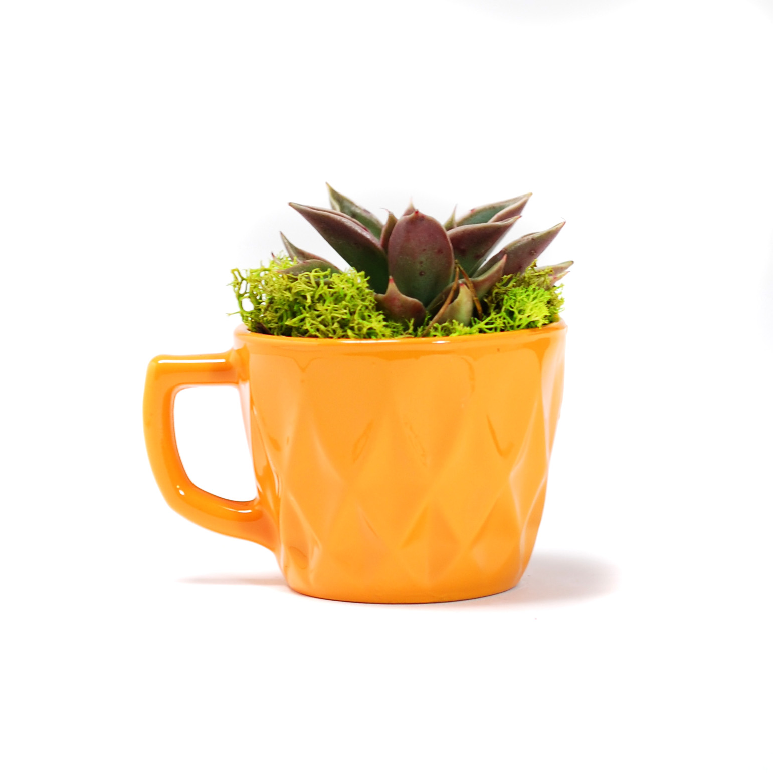 Orange Punch Cup Planter